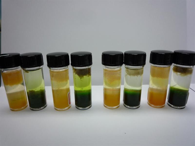 萃取不同植物或水果中所含的DNA